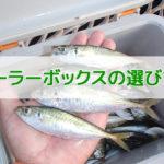 釣り用クーラーボックスの大きさの目安