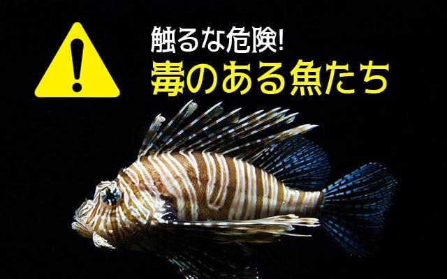防波堤釣りで釣れる毒魚