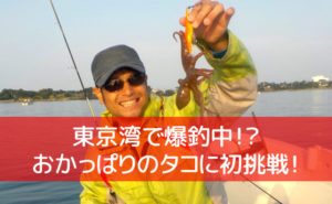東京湾の堤防タコ