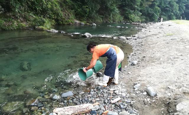 早戸川国際マス釣場の放流