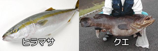 船釣りで釣れる大型魚