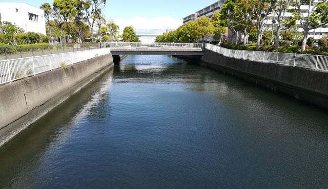 富岡川の水路