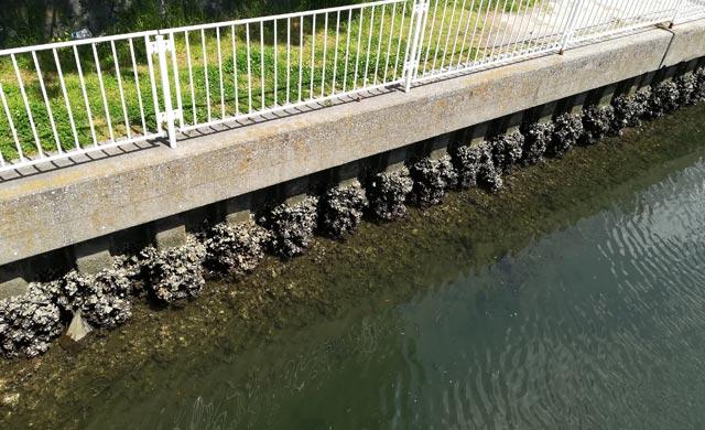 金沢八景の宮川でハゼ釣り