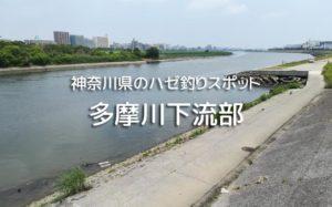 多摩川のハゼ釣り