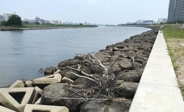 六郷橋の護岸