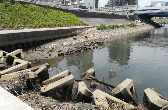 六郷橋のハゼ釣り