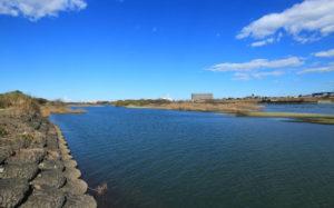 相模川のハゼ釣り
