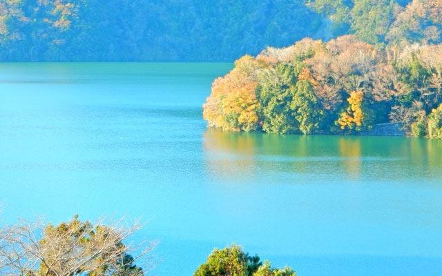 津久井湖のワカサギ