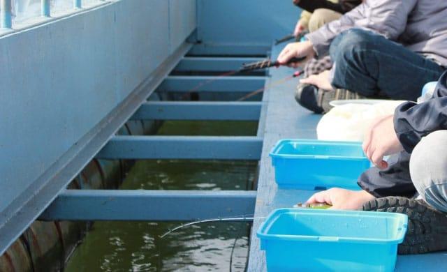 ドーム船のワカサギ釣り