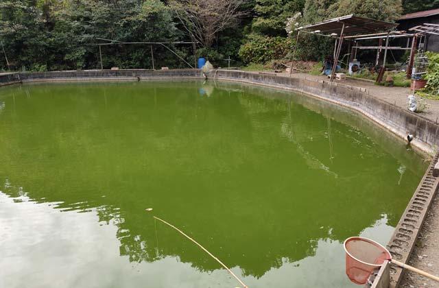 神奈川県横浜市の緑水園釣り堀